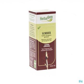 herbalgem-sorbier-macerat-concentre-de-bourgeons-50-ml